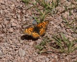 Butterfly at the Bells