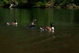 Ducky Family