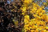 Autumn Leaves 2016