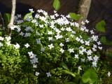 Spring in the Mountains - Gatlinburg 2014