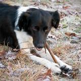 Niva found a yammy stick.
