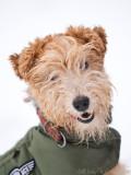 Ella, the terrier