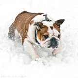 Otti, the snowplough