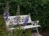 Rose bench overlooking the garden