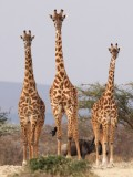 Tanzania safari Sep 2016