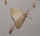 4. Rhodometra sacraria (Linnaeus, 1767)