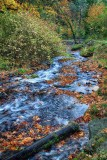 summer_and_fall_pnw_2013