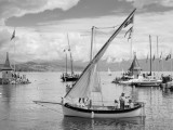 Voiles Latines Morges 2014