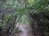 City Creek Trail P1000655.jpg