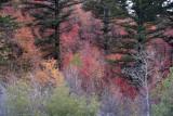 Buckskin Autumn Scene by Kantabutra _DSC4801.jpg