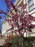 Frazier Hall Spring 2015.jpg
