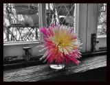 Flower on the window still