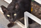 Street Cats of Israel Project