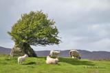 Ireland Spring 2013