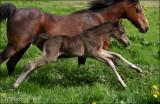 Iris' foal april 2014