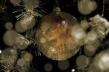 I wish you a Merry Christmas!