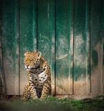 Panthera Sri Lanka