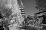 097 - Big Goose Pagoda, Xi'an