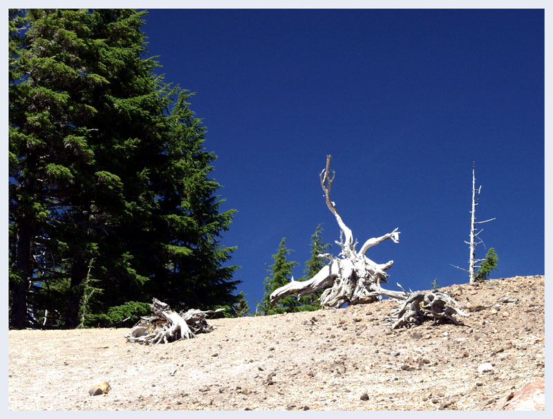 Looks like driftwood, doesnt it?