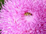 bug in flower