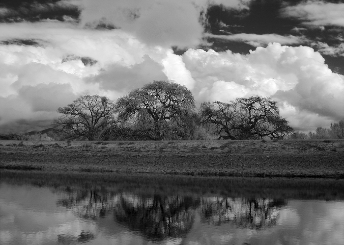 Pond #2 .jpg