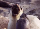 seal_coast