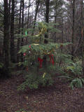 Christmas Tree on Bootleg