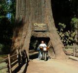 7-Sequoia 2001