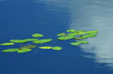 x8500_LillyPads CloudReflections.jpg