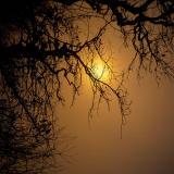 y1786Velvia-Mtn-SunRise-Fog-sw.jpg