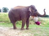 Elephant Mike.
