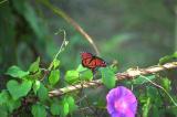 EvergladesButterfly.jpg