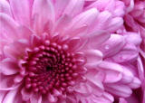 Floral Fotographs