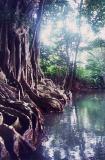 01036a_Dominica River