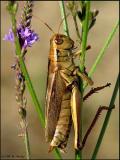 Grasshopper & Flower