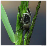 Beetle and Water Drop
