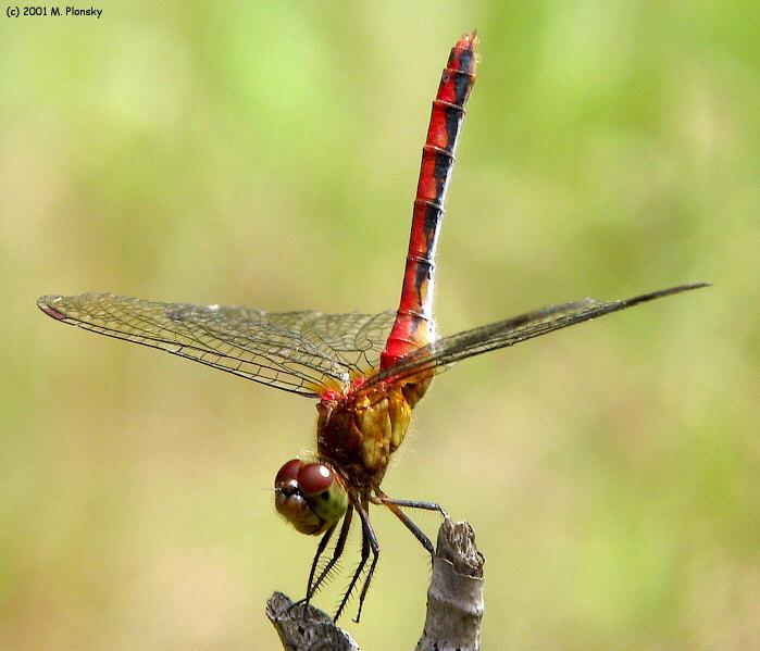 Dragonfly Gymnastics