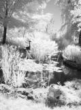 Surreal summer pond