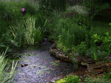 Evening rain on the pond