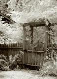 Garden gate with wisteria