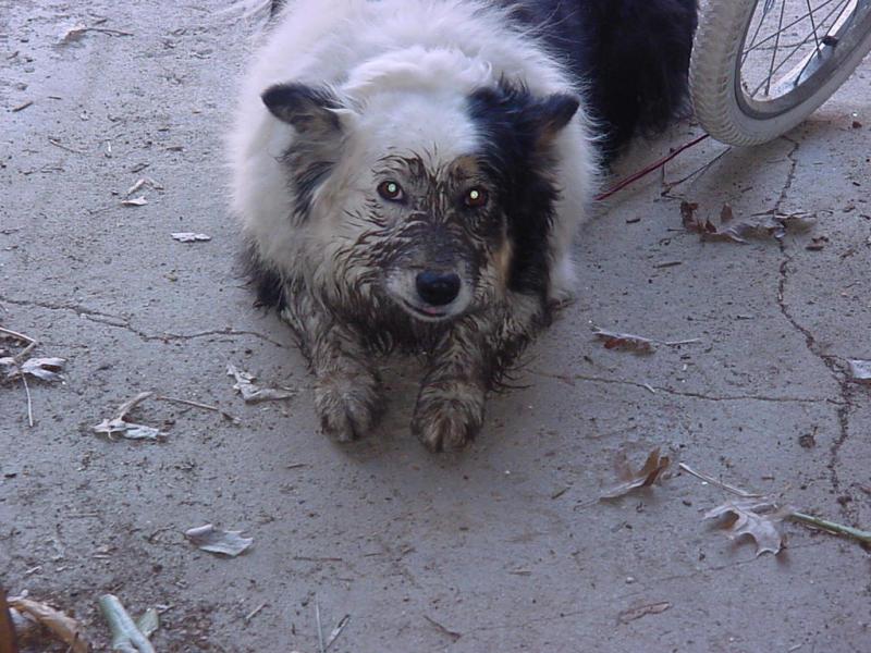 filthydog042801.JPG
