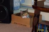 Joanne's Cat 1.JPG