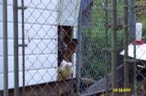 Chickens 082401 -4.JPG