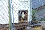 Chickens 082401 -5.JPG