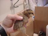 chicks 5- 060801 .JPG