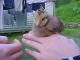 chicksonhands 3 -061401.JPG