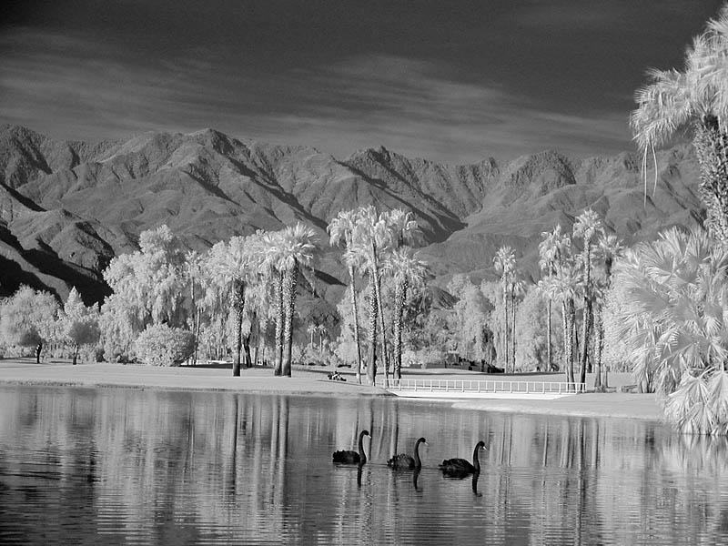 Swan lake  (infrared)