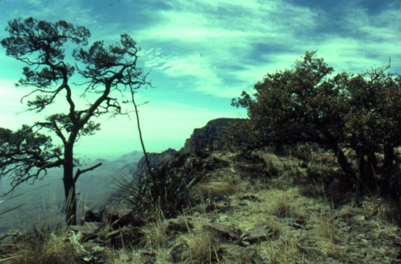South Rim trail:  Easter 1978.