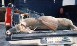 Unluckiest buck in Texas - 1993