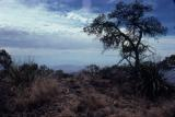 Mexico and the Sierra del Carmen Mountains from the South Rim trail: Easter 1978.